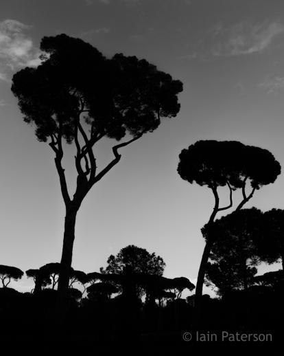 Rome-29