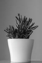 Succulents-3