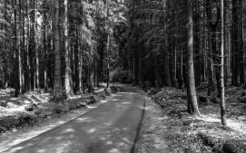 Bayreuth-3
