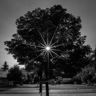 sunstars-6