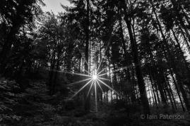 sunstars-7
